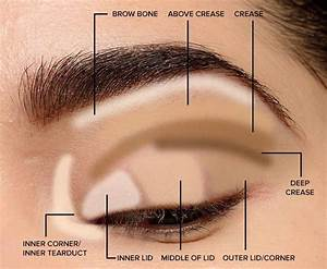 Parts Of The Eye For Applying Makeup Lid  Crease