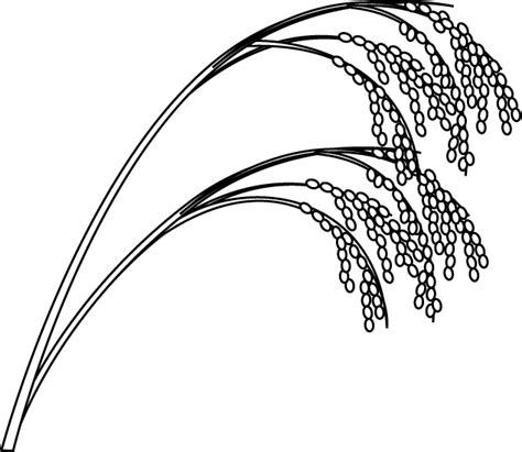 brown rice plant clipart clipart suggest