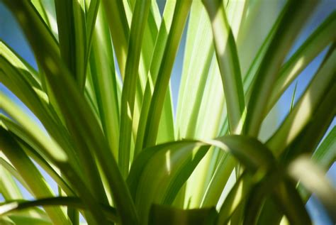 green plants for garden indoor plants for your home that you will not immediately kill