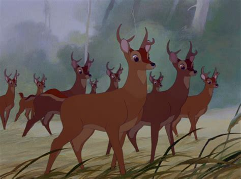 List of Species seen in Bambi Disney Animals Wiki Fandom