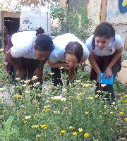 home american united school kuwait