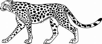 Cheetah Coloring Animal Clipart Colouring Cheetahs Colorful