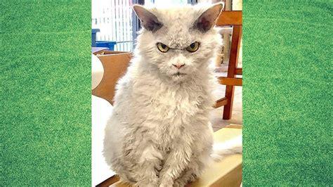 gambar kucing  mudah digambar koleksi gambar hd