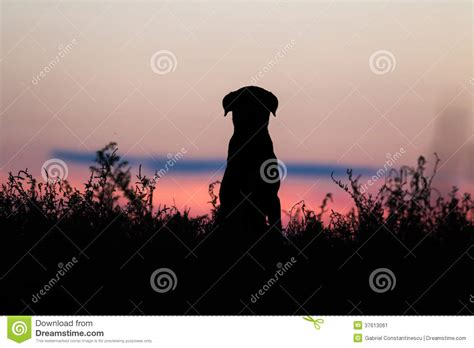 dog silhouette cartoon vector cartoondealercom