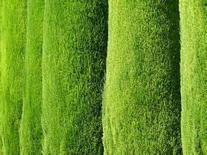 Welches Gras Als Sichtschutz : hecken heckenpflanzen haus ~ Sanjose-hotels-ca.com Haus und Dekorationen