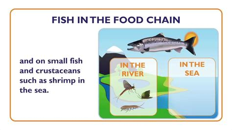 fish what is a fish fish characteristics and food chain 915 | maxresdefault