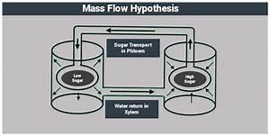 Mass Flow Hypothesis