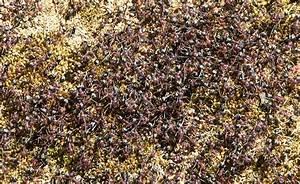 Wie Bekämpfe Ich Ameisen : eine begegnung mit australischen meat ants gattung ~ Whattoseeinmadrid.com Haus und Dekorationen
