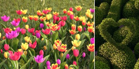 plants and flowers pictures new hq plants hd 3d trees vol 03 hd 3d flowers vol 02 tulips