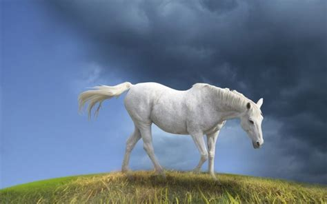Horse Animal 2013 High Resolution Hd Wallpapers Free