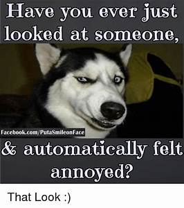 Mildly Annoyed Dog Meme | www.imgkid.com - The Image Kid ...