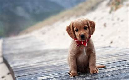 Dog Puppies Animals Surface Wooden Backgrounds Wallpapers