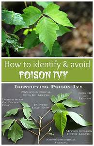 How To Identify And Avoid Poison Ivy And Ways To Help