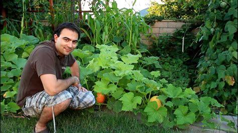 butternut squash growing tips youtube
