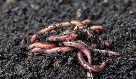 What Kind Of Animals Live In The Soil?