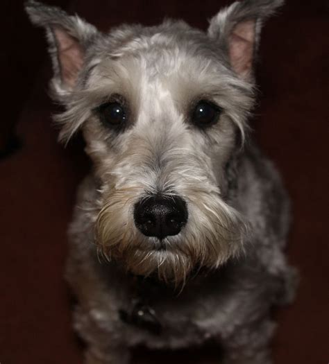 1000 ideas about best small dogs on