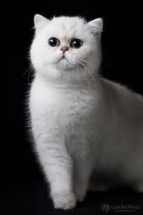 Cool Cat Posing