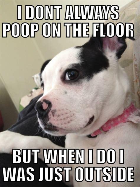 The Dog Meme - this is sooo my weiner lol weiner models