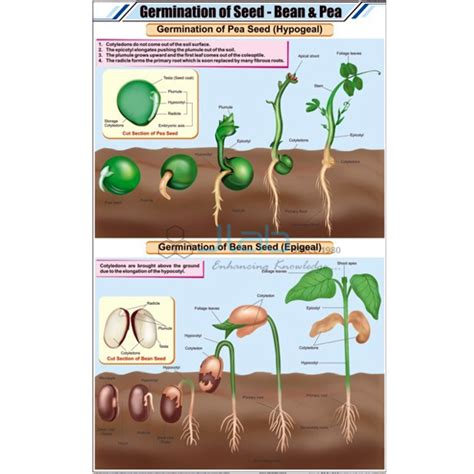 reproduction  plants chart india reproduction  plants