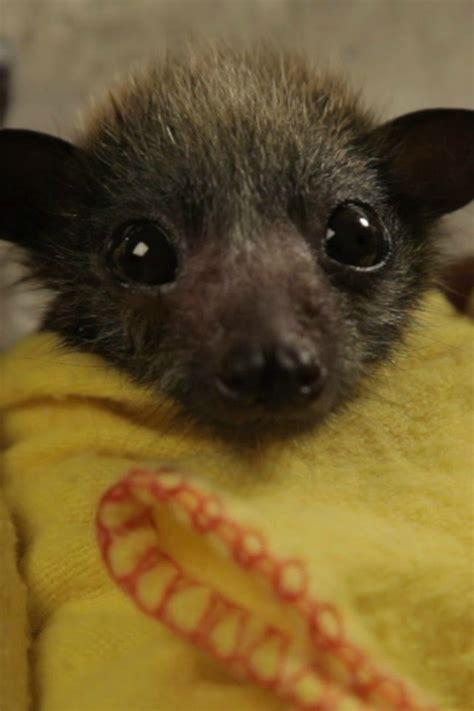 baby bat burritos     aww