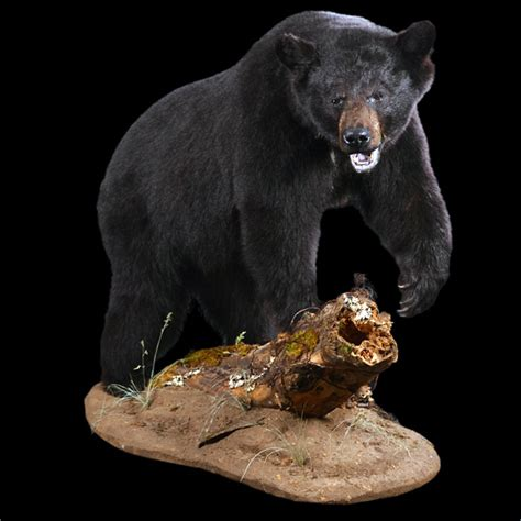 nordamerikanische tiere  class trophy