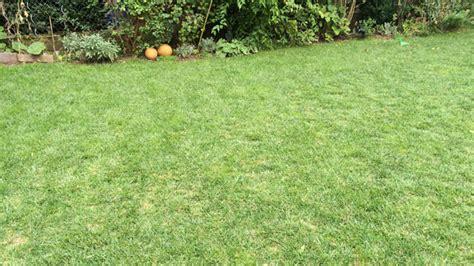 Vertrockneten Rasen Retten by Rasen Anlegen Und S 228 En Leicht Gemacht