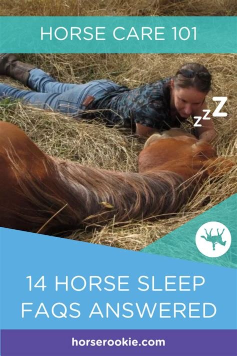 horses sleep frequently asked questions horse humans night care