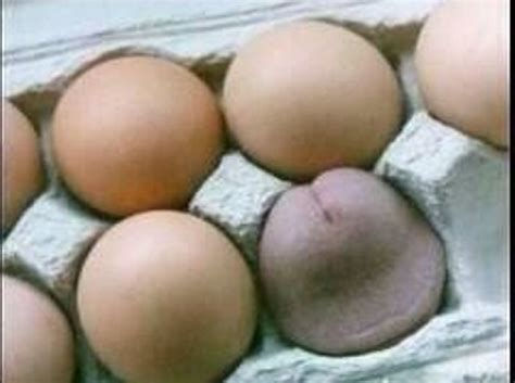 Thanksgiving Turkey Big Tits - Sex Porn Images