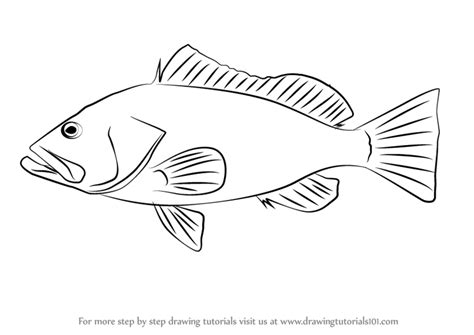 grouper draw drawing step