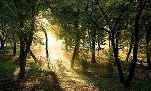 fonds d 39 écran hd forêt 2 forest hd wallpapers 2