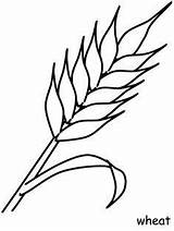 Coloring Wheat Coloringpagebook Communion Flower sketch template