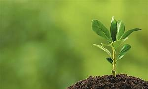 Plant Your Roots And Watch Them Grow  Creating Brand