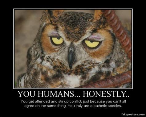 Art School Owl Meme - snobbish owl by a dawg13 on deviantart