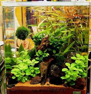 Aquarium Einrichten 60l : nano cube aquarium von dennerle aquariums pinterest ~ Michelbontemps.com Haus und Dekorationen