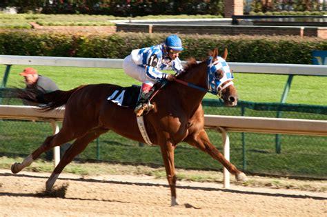 greatest racehorse horses races