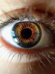 Close Up Of Human Eye  U00b7 Free Stock Photo