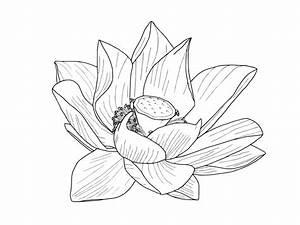 Lotus Flower Outline - Rooweb Clipart