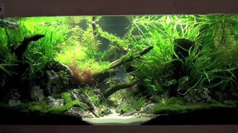 planted aquarium competition hannover  youtube