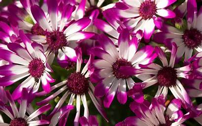 Flowers Purple Wallpapers