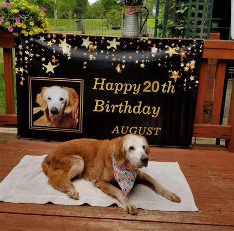 meet augie   year  dog