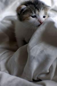 tired kitten - Kittens Photo (22309605) - Fanpop