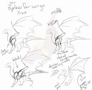 Sketchy Dragon Wing Placement Tutorial By Pteradragon On