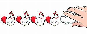 Commercial Production Of Chickens Takes Toll On Genetic Diversity