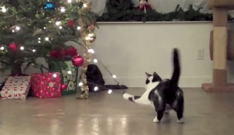 cats       christmas cheer
