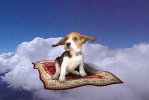 Flying Dog GIFs - Find & Share on GIPHY