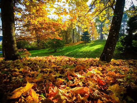 5 vietas, kur doties baudīt Zelta rudeni