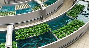 aquaponie bassin potager poissons mon jardin ma maison With photos de bassins de jardin 5 potager
