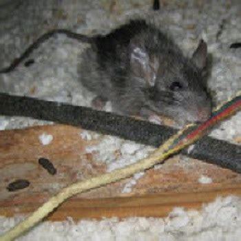attic insulation tacoma improves air quality croach