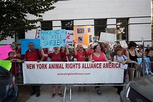 Animal rights activists protest city's kill-shelter policy