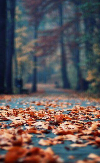 Fall Road Iphone Wallpaper by 2863 Best Mobile Wallpaper Images On